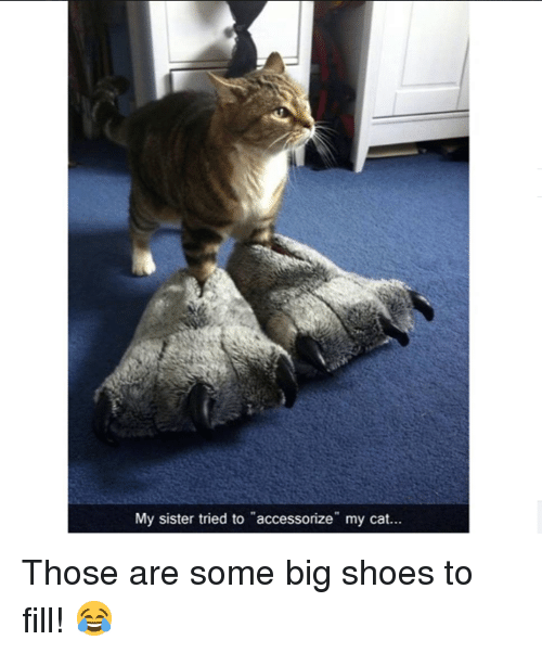 f58f2435d57c My Sister Tried to Accessorize My Cat Those Are Some Big Shoes to ...