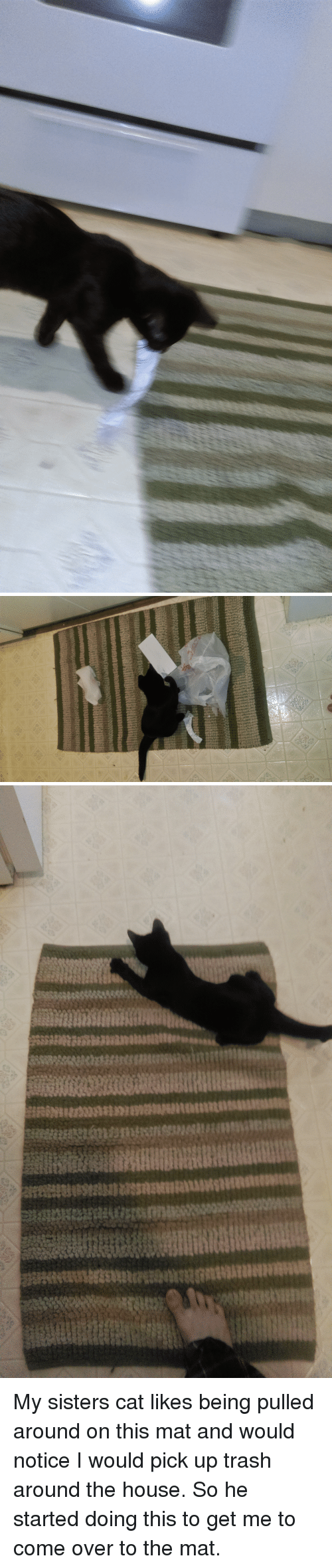 Come Over, Trash, and House: My sisters cat likes being pulled around on this mat and would notice I would pick up trash around the house. So he started doing this to get me to come over to the mat.