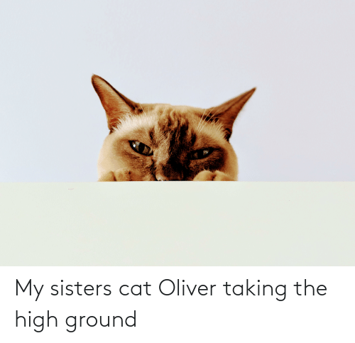 Cat, Sisters, and High: My sisters cat Oliver taking the high ground