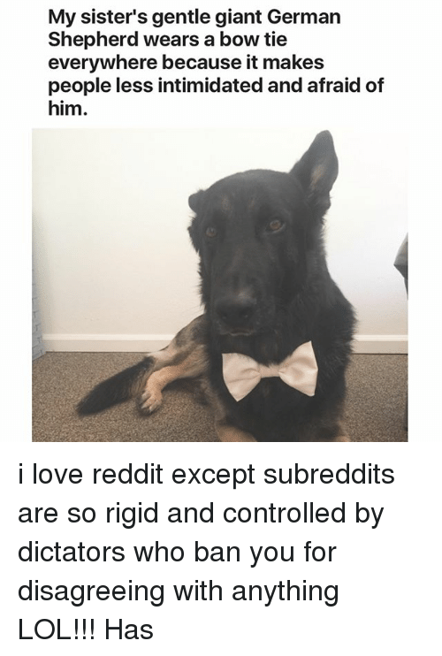 Lol, Love, and Reddit: My sister's gentle giant German  Shepherd wears a bow tie  everywhere because it makes  people less intimidated and afraid of  him. i love reddit except subreddits are so rigid and controlled by dictators who ban you for disagreeing with anything LOL!!! Has