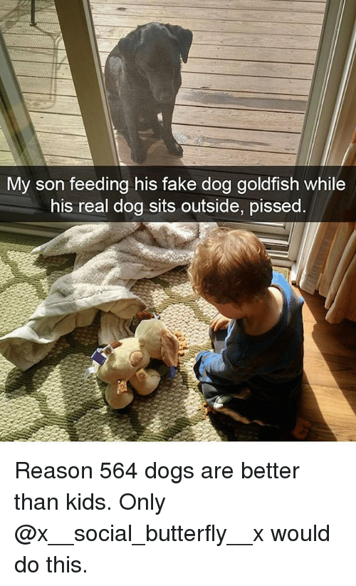 Dogs, Fake, and Goldfish: My son feeding his fake dog goldfish while  his real dog sits outside, pissed Reason 564 dogs are better than kids. Only @x__social_butterfly__x would do this.
