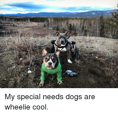 Dogs, Cool, and Wheelie