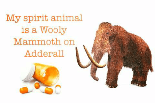 My Spirit Animal Is a Wooly Mammoth on Adderall | Animals