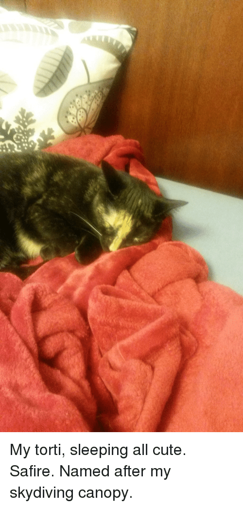 Cute Sleeping And Skydiving My Torti All Safire