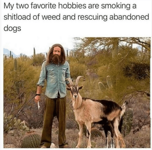 Dogs, Smoking, and Weed: My two favorite hobbies are smoking a  shitload of weed and rescuing abandoned  dogs