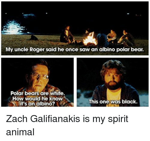 why zach galifianakis is my favorite On feb 24, zach galifianakis and the crew of his funny or die interview series set up their spartan black backdrop in the white house diplomatic room and then waited for their guest.