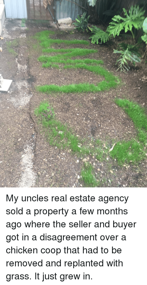 Chicken, Real Estate, and Got: My uncles real estate agency sold a property a few months ago where the seller and buyer got in a disagreement over a chicken coop that had to be removed and replanted with grass. It just grew in.