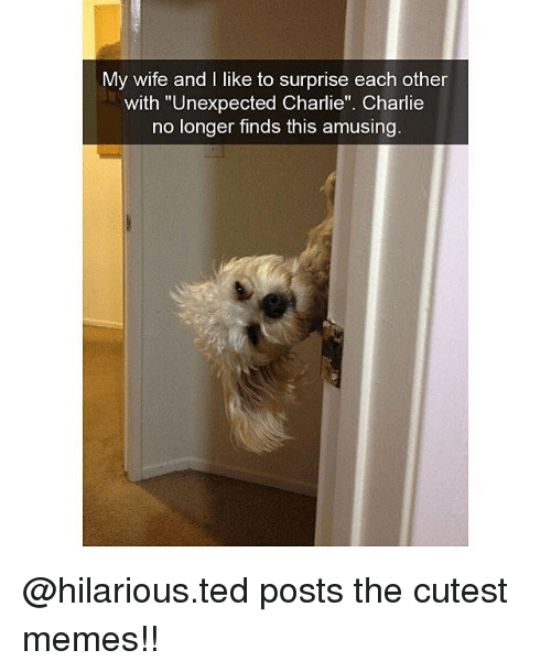 "Charlie, Memes, and Ted: My wife and I like to surprise each other  with ""Unexpected Charlie"". Charlie  no longer finds this amusing @hilarious.ted posts the cutest memes!!"