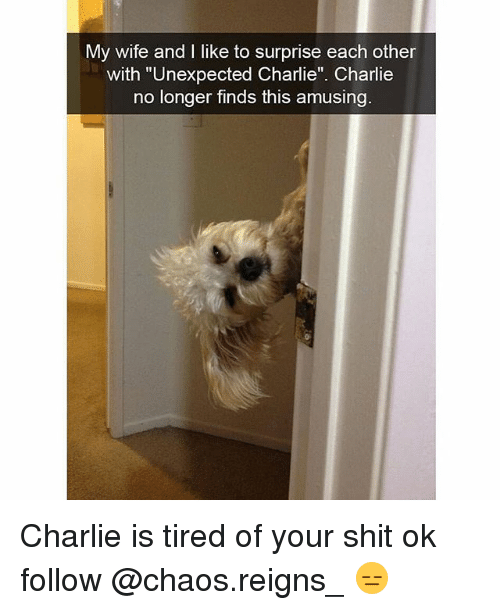 "Charlie, Memes, and Shit: My wife and I like to surprise each other  with ""Unexpected Charlie"". Charlie  no longer finds this amusing Charlie is tired of your shit ok follow @chaos.reigns_ 😑"