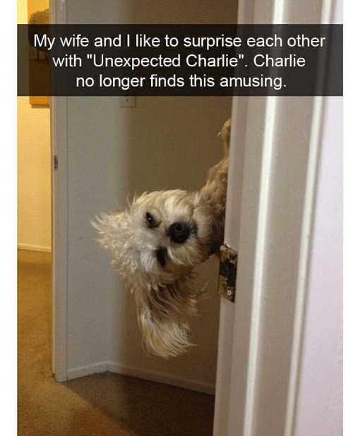 """Charlie, Charlie Charlie, and Wife: My wife and I like to surprise each other  with """"Unexpected Charlie"""". Charlie  no longer finds this amusing"""