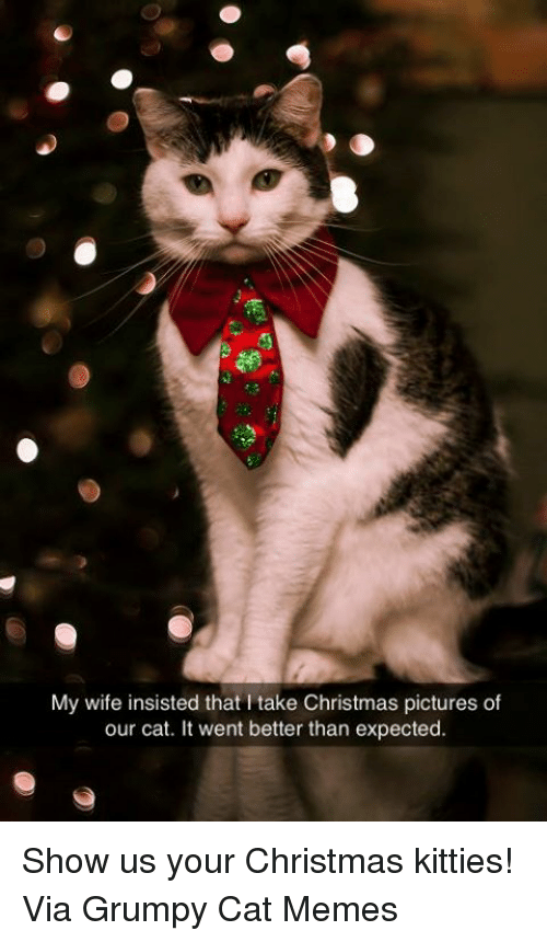 Grumpy Cat Christmas Memes.My Wife Insisted That L Take Christmas Pictures Of Our Cat