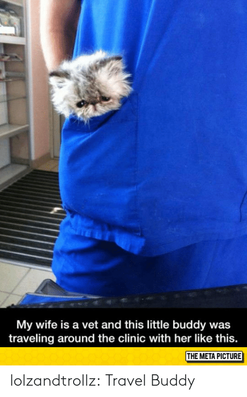 Tumblr, Blog, and Http: My wife is a vet and this little buddy was  traveling around the clinic with her like this.  THE META PICTURE lolzandtrollz:  Travel Buddy