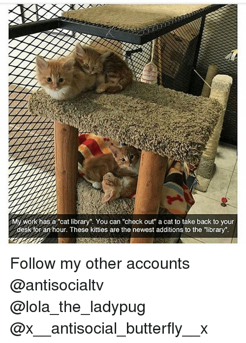 """Kitties, Memes, and Work: My work has a """"cat library"""". You can """"check out"""" a cat to take back to your  desk for an hour. These kitties are the newest additions to the """"library"""". Follow my other accounts @antisocialtv @lola_the_ladypug @x__antisocial_butterfly__x"""