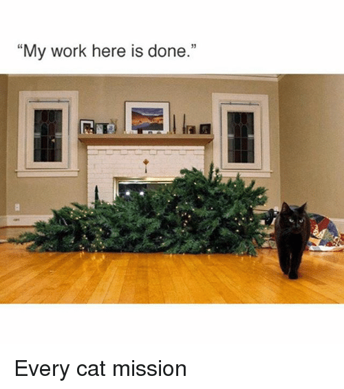 "Funny, Work, and Cat: ""My work here is done.""  PAAR Every cat mission"