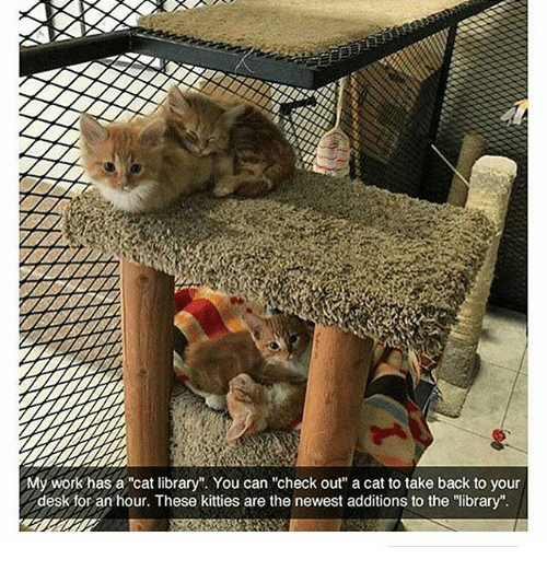 """Kitties, Memes, and Desk: My workhas a cat library"""". You can """"check out"""" a cat to take back to your  desk for an hour. These kitties are the newest additions to the """"library"""