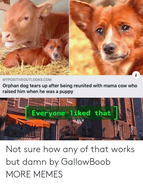 Dank, Memes, and Target: MYPOSITIVEOUTL0OKS.COM  Orphan dog tears up after being reunited with mama cow who  raised him when he was a puppy  Everyone 1iked that Not sure how any of that works but damn by GallowBoob MORE MEMES