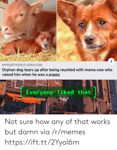 Memes, Puppy, and How: MYPOSITIVEOUTL0OKS.COM  Orphan dog tears up after being reunited with mama cow who  raised him when he was a puppy  Everyone 1iked that Not sure how any of that works but damn via /r/memes https://ift.tt/2Yyol6m