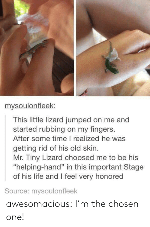 """Life, Tumblr, and Blog: mysoulonfleek:  This little lizard jumped on me and  started rubbing on my fingers.  After some time I realized he was  getting rid of his old skin  Mr. Tiny Lizard choosed me to be his  """"helping-hand"""" in this important Stage  of his life and I feel very honored  Source: mysoulonfleek awesomacious:  I'm the chosen one!"""