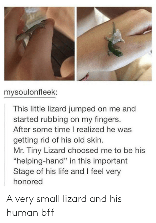 """Life, Time, and Old: mysoulonfleek:  This little lizard jumped on me and  started rubbing on my fingers.  After some time I realized he was  getting rid of his old skin.  Mr. Tiny Lizard choosed me to be his  """"helping-hand"""" in this important  Stage of his life and I feel very  honored A very small lizard and his human bff"""