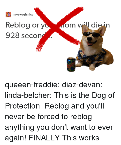 Tumblr, Blog, and Http: myswagisnice  Reblog or yom will die in  928 seco queeen-freddie: diaz-devan:  linda-belcher:  This is the Dog of Protection. Reblog and you'll never be forced to reblog anything you don't want to ever again!   FINALLY   This works