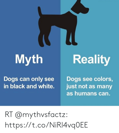 Myth Reality Dogs Can Only See Colors Just Not As