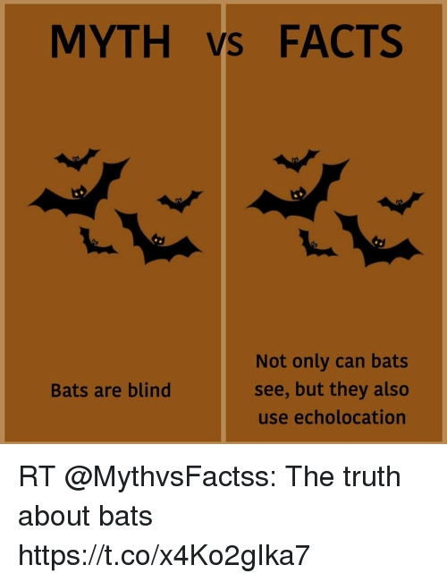 Myth S Facts Not Only Can Bats See But They Also Use Echolocation