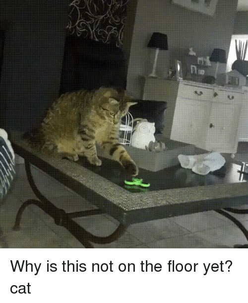 Funny, Cat, and Why: na Why is this not on the floor yet?cat