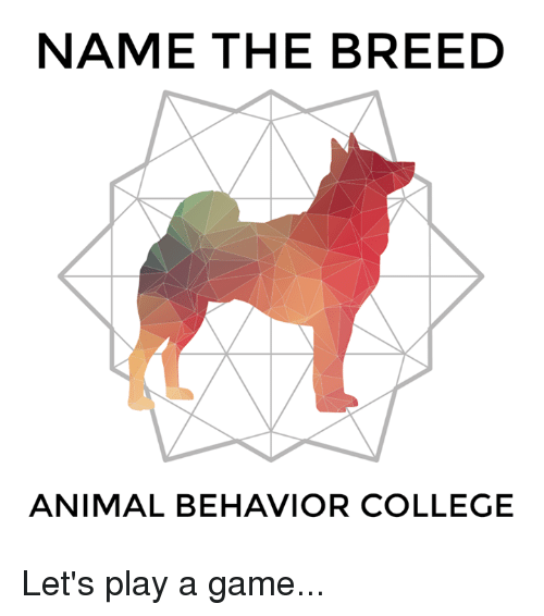 College Memes And Animal NAME THE BREED ANIMAL BEHAVIOR COLLEGE Lets Play A