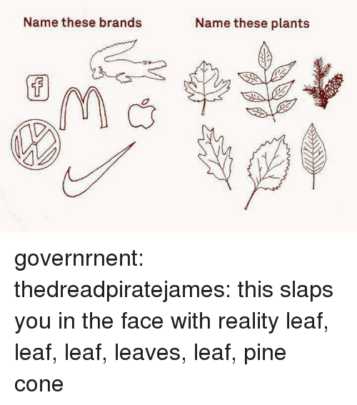 Name These Brands Name These Plants Governrnent