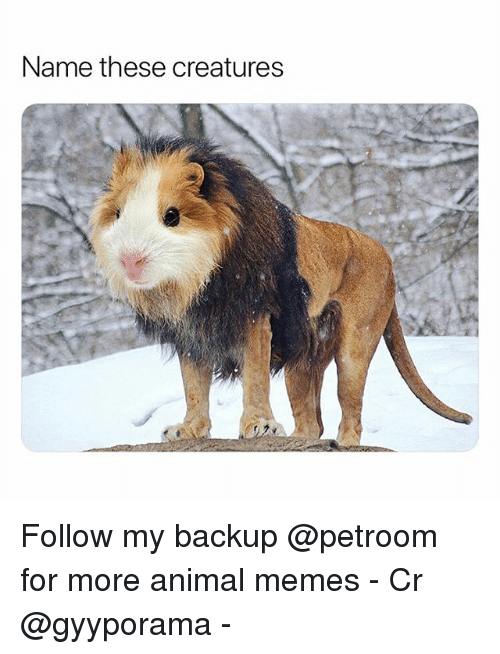 Funny, Memes, and Animal: Name these creatures Follow my backup @petroom for more animal memes - Cr @gyyporama -