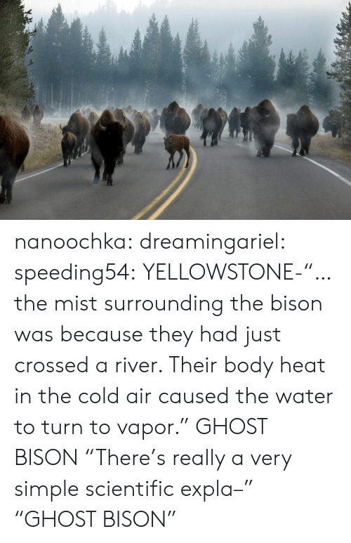 """Target, Tumblr, and Blog: nanoochka:  dreamingariel:  speeding54:  YELLOWSTONE-""""…the mist surrounding the bison was because they had just crossed a river. Their body heat in the cold air caused the water to turn to vapor.""""  GHOST BISON  """"There's really a very simple scientific expla–"""" """"GHOST BISON"""""""
