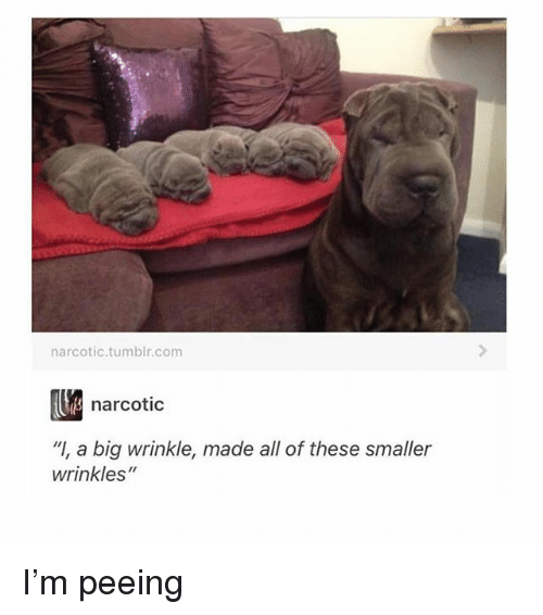"""Memes, Tumblr, and 🤖: narcotic.tumblr.com  narcotic  """"I, a big wrinkle, made all of these smaller  wrinkles"""" I'm peeing"""