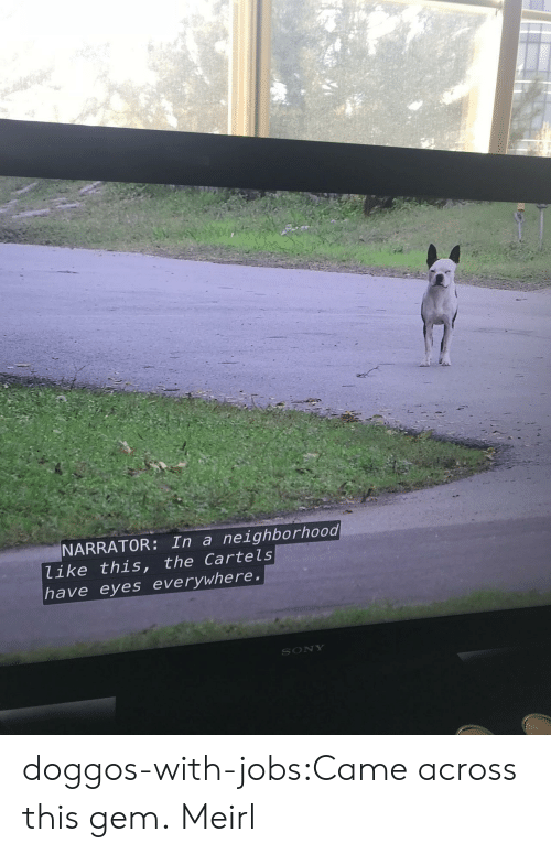 Sony, Tumblr, and Blog: NARRATOR: In a neighborhood  like this, the Cartels  have eyes everywhere  SONY doggos-with-jobs:Came across this gem. Meirl