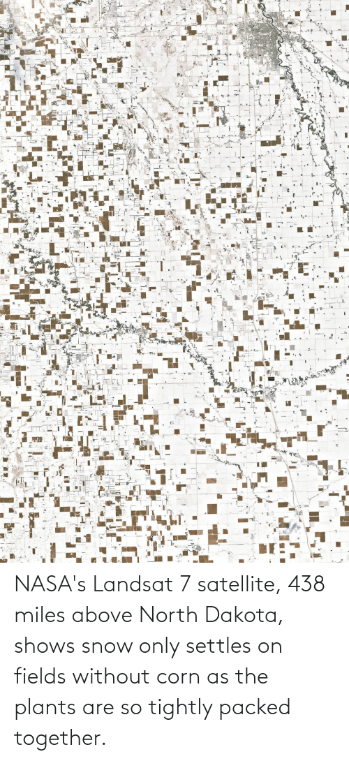 Snow, Corn, and North Dakota: NASA's Landsat 7 satellite, 438 miles above North Dakota, shows snow only settles on fields without corn as the plants are so tightly packed together.