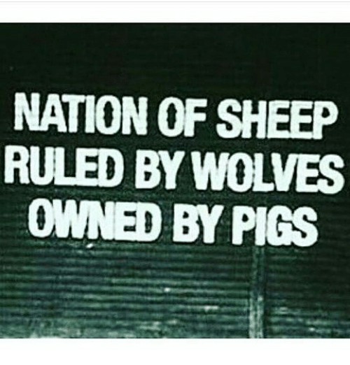 Image result for nation of sheep ruled by wolves owned by pigs