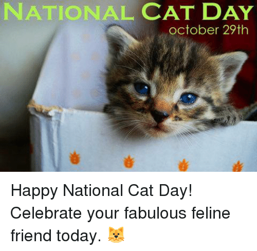 National Cat Day October 29th Happy National Cat Day Celebrate Your Fabulous Feline Friend Today Friends Meme On Me Me