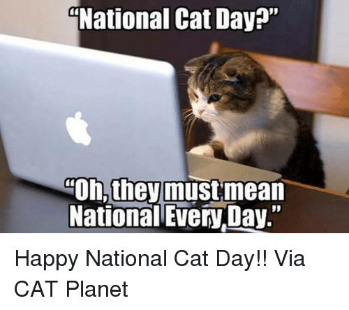 national cat day oh they must mean national everyday happy 5823806 ✅ 25 best memes about happy national cat day happy national