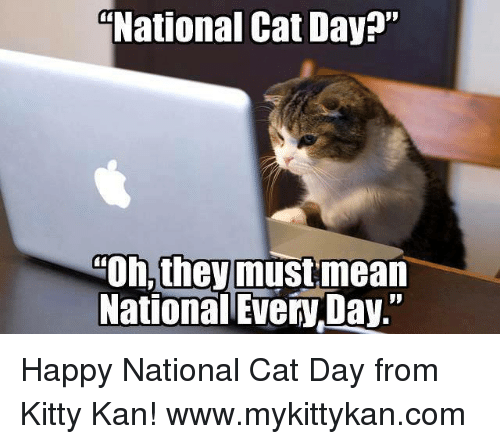 """Memes, Happy, and 🤖: National Cat Day?""""  Oh, theymustmean  National Every Day."""" Happy National Cat Day from Kitty Kan!  www.mykittykan.com"""