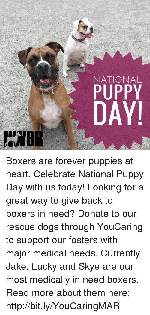 National Puppy Day Boxers Are Forever Puppies At Heart Celebrate