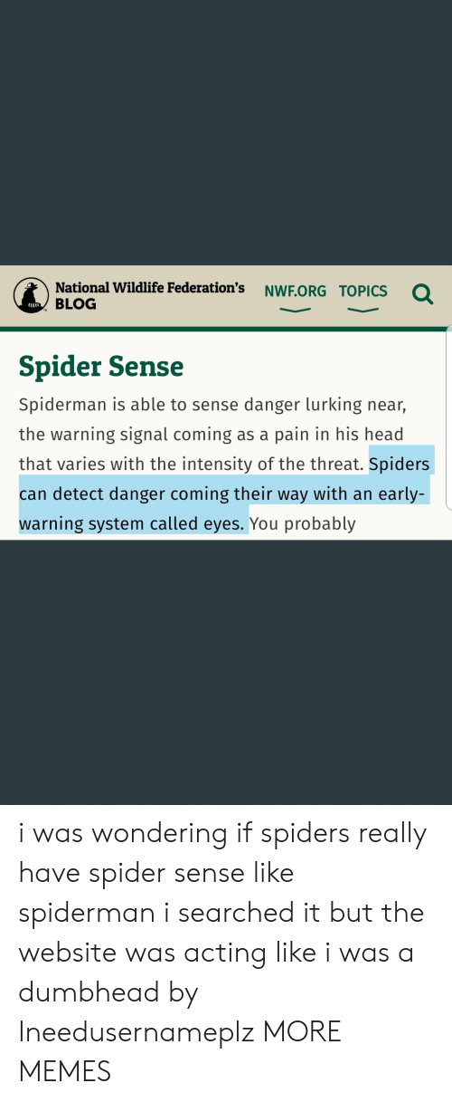 Dank, Head, and Lurking: National Wildlife Federation's NWF.ORG TOPICs  BLOG  CCCI  Spider Sense  Spiderman is able to sense danger lurking near,  the warning signal coming as a pain in his head  that varies with the intensity of the threat. Spiders  can detect danger coming their way with an early-  warning system called eyes. You probably i was wondering if spiders really have spider sense like spiderman i searched it but the website was acting like i was a dumbhead by Ineedusernameplz MORE MEMES