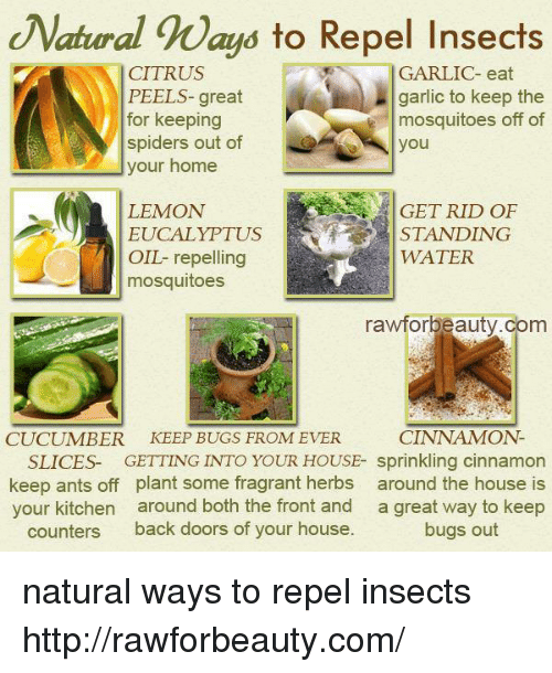 Memes Home And House Natral Ways To Repel Insects Citrus Ls Great