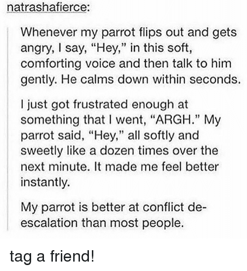 """Memes, Voice, and Angry: natrashafierce:  Whenever my parrot flips out and gets  angry, say, """"Hey,"""" in this soft,  comforting voice and then talk to him  gently. He calms down within seconds.  I just got frustrated enough at  something that I went, """"ARGH."""" My  parrot said, """"Hey,"""" all softly and  sweetly like a dozen times over the  next minute. It made me feel better  instantly.  My parrot is better at conflict de-  escalation than most people. tag a friend!"""