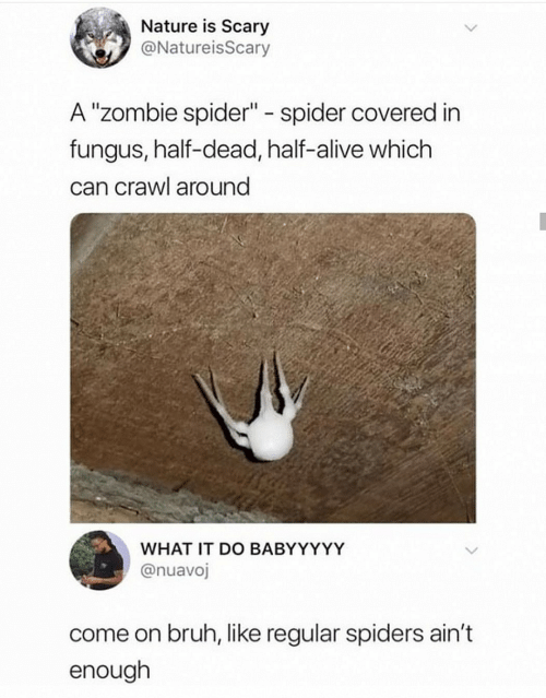 "Alive, Bruh, and Spider: Nature is Scary  @NatureisScary  A ""Zombie spider"" spider covered in  fungus, half-dead, half-alive which  can crawl around  WHAT IT DO BABYYYYY  @nuavoj  come on bruh, like regular spiders ain't  enough"