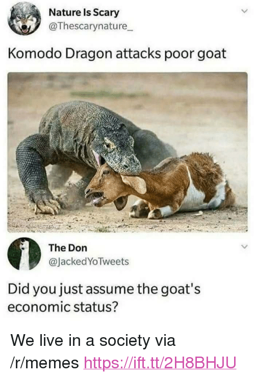 """Memes, Goat, and Live: Nature Is Scary  @Thescarynature  Komodo Dragon attacks poor goat  The Don  @JackedYoTweets  Did you just assume the goat's  economic status? <p>We live in a society via /r/memes <a href=""""https://ift.tt/2H8BHJU"""">https://ift.tt/2H8BHJU</a></p>"""
