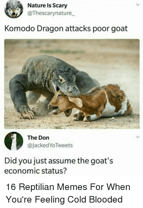 Memes, Goat, and Nature: Nature Is Scary  @Thescarynature  Komodo Dragon attacks poor goat  The Don  @JackedYoTweets  Did you just assume the goat's  economic status? 16 Reptilian Memes For When You're Feeling Cold Blooded