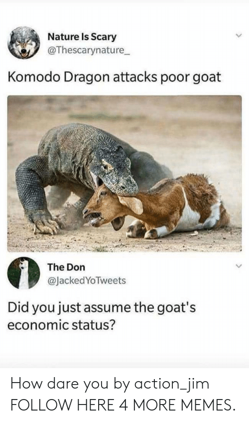 Dank, Memes, and Target: Nature Is Scary  @Thescarynature  Komodo Dragon attacks poor goat  The Don  @JackedYoTweets  Did you just assume the goat's  economic status? How dare you by action_jim FOLLOW HERE 4 MORE MEMES.
