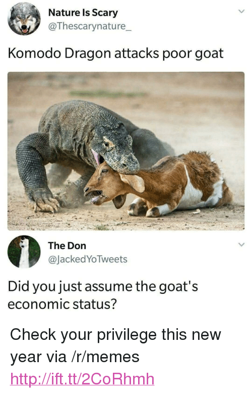 """Memes, New Year's, and Goat: Nature ls Scary  @Thescarynature_  Komodo Dragon attacks poor goat  The Dorn  @JackedYoTweets  Did you just assume the goat's  economic status? <p>Check your privilege this new year via /r/memes <a href=""""http://ift.tt/2CoRhmh"""">http://ift.tt/2CoRhmh</a></p>"""