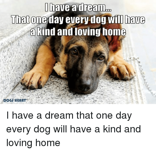 nave a dream that one day every dog will have a kind and loving home