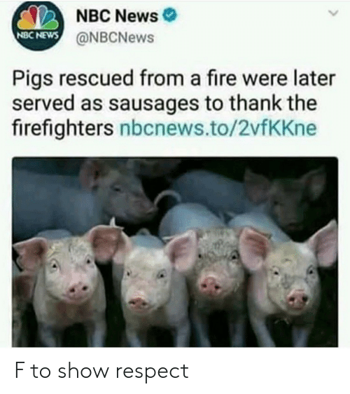Fire, News, and Respect: NBC News  @NBCNews  NBC NEWS  Pigs rescued from a fire were later  served as sausages to thank the  firefighters nbcnews.to/2vfKKne F to show respect