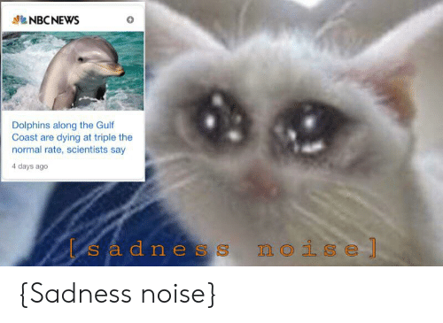 Dolphins, Nbcnews, and Dank Memes: NBCNEWS  Dolphins along the Gulf  Coast are dying at triple the  normal rate, scientists say  4 days ago  sadnes  noise] {Sadness noise}